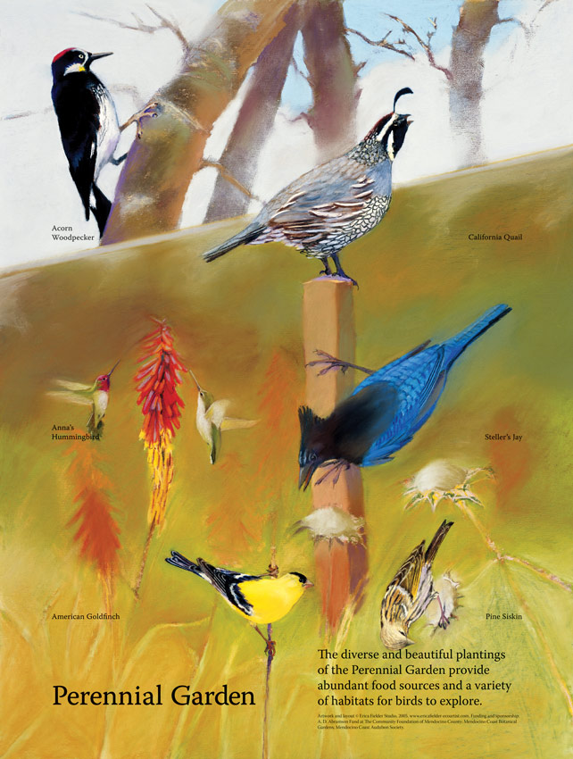 Bird Illustrations show Acorn woodpecker, California quail, Anna's hummingbird, Steller's jay, American goldfinch, and pine siskin on this trailside display. It helps visitors the Mendocino Coast Botanical Gardens identify common birds in the Perennial Garden.