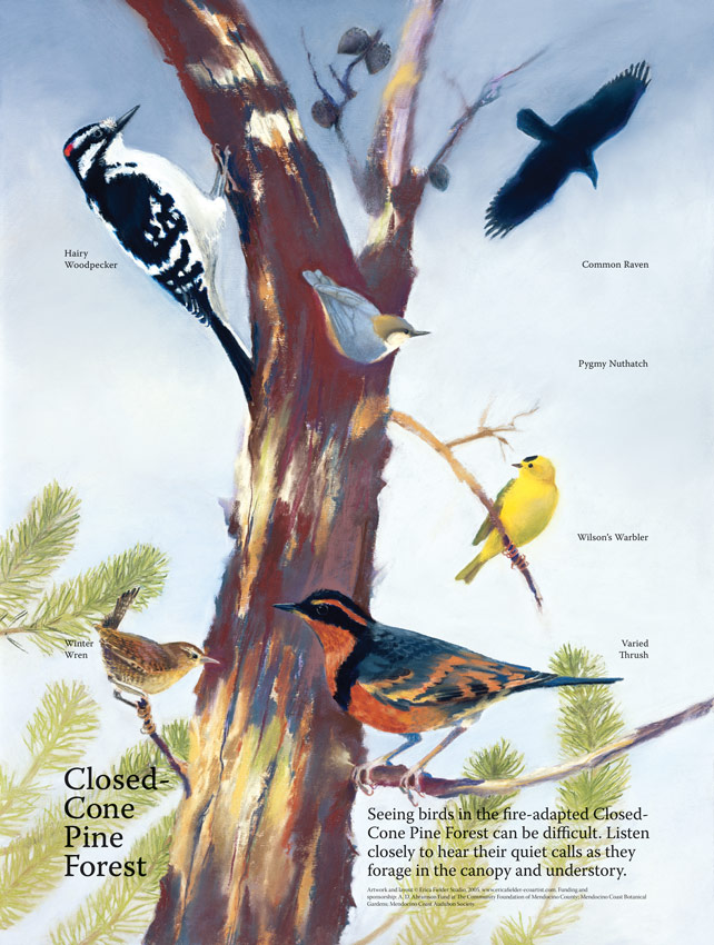 Installed in the Mendocino Coast Botanical Gardens, this interpretive panel was funded by the Botanical Gardens, Audubon Society, and the Community Foundation of Mendocino County. It illustrates a hairy woodpecker, raven, pygmy nuthatch, Wilson's warbler, Pacific wren, and varied thrush in typical habitat.