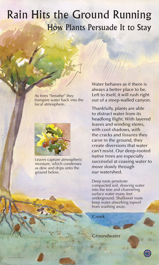 Rain hits the ground running and plants help keep it in place. This educational panel explains that leaves, stems and roots keep water in the ground and help maintain healthy soils.