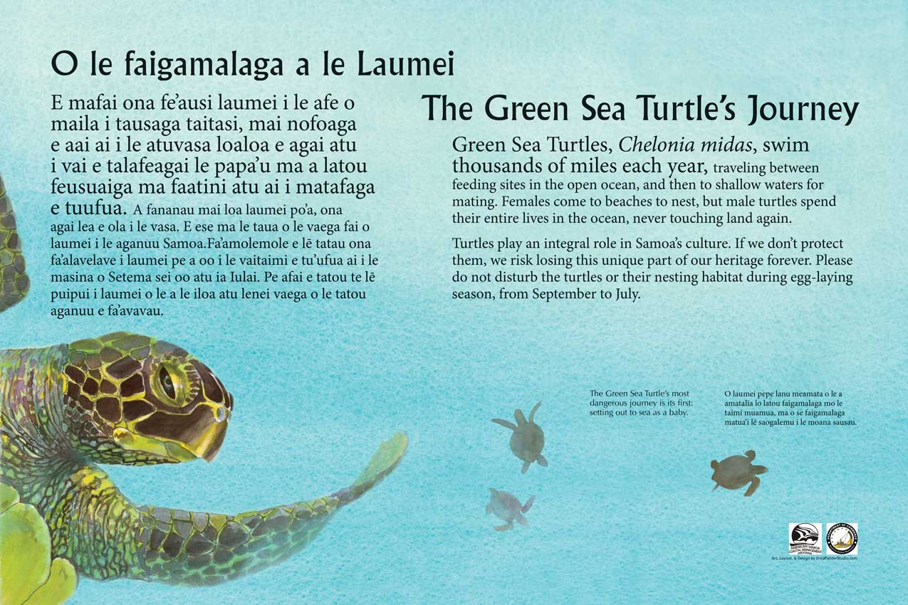Green sea turtles play a critical part in Samoan Culture and must be protected. The watercolor panel depicts a large and several young turtles and tells the story of its journey in both Samoan and English.