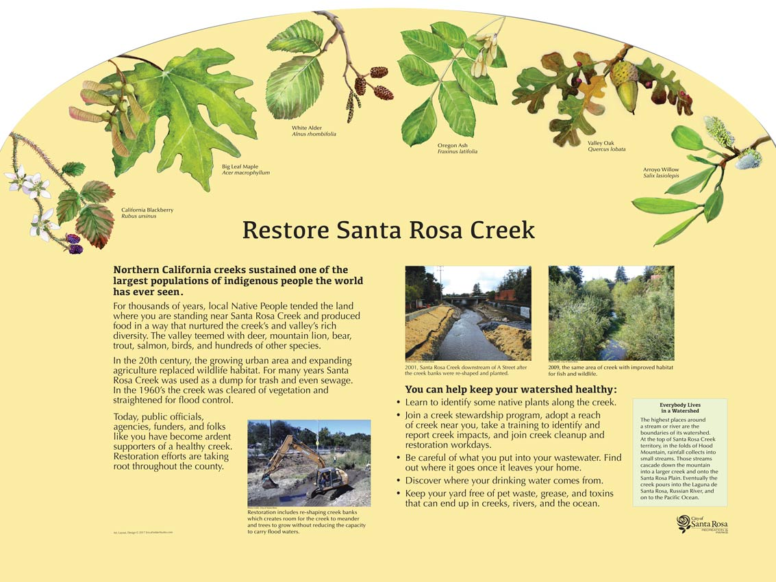 An Adobe Park interpretive display describes how for many years the Santa Rosa Creek was used as a dump for trash and even sewage. In the 1960's Santa Rosa Creek was cleared of vegetation and straightened for flood control. Today, Sonoma County, the City of Santa Rosa, other agencies, and many citizens are conducting restoration efforts.