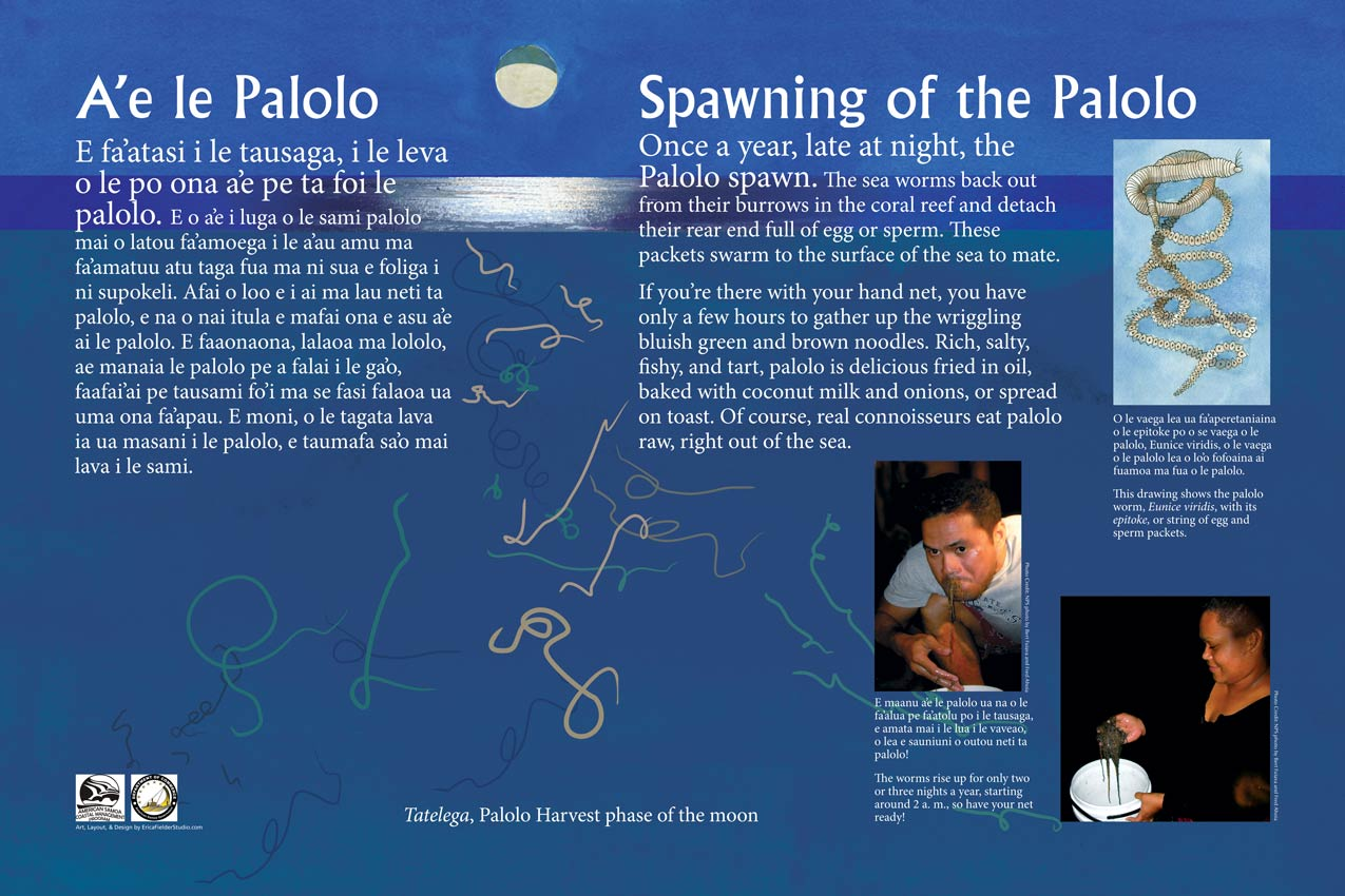 This educational sign tells you that the delicious Palolo worms spawn Polynesian Pacific waters once a year and you should catch and eat them right away. The panel gives you a recipe for how to prepare them.
