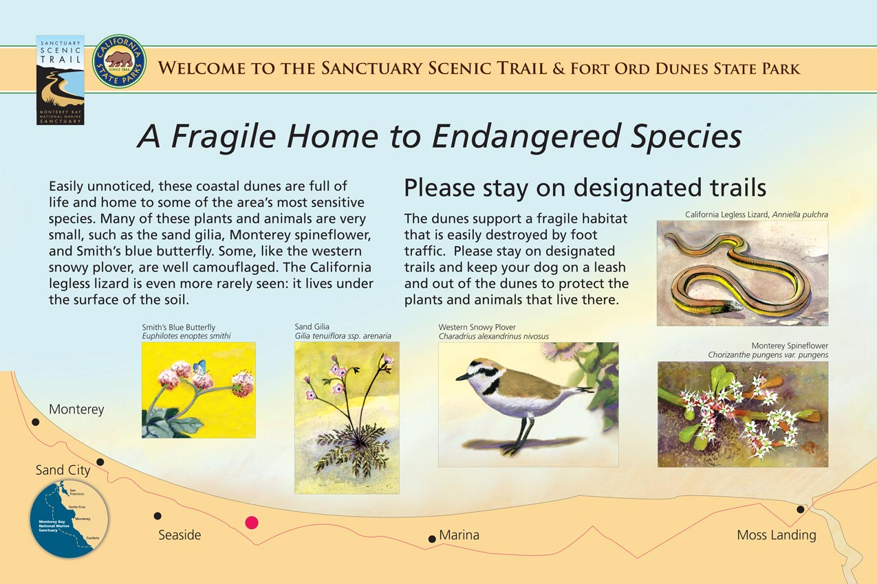 The Fort Ord coastal dunes are home to some of the area's most sensitive plant and animal species. This illustrated panel depicts sand gilia, Monterey spineflower, Smith's blue butterfly, western snowy plover, and the California legless lizard.