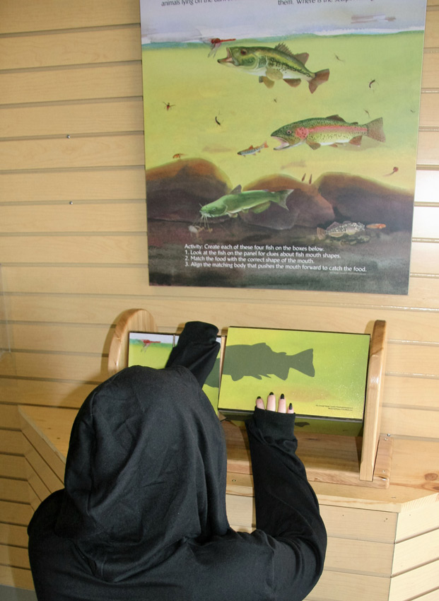 The interpretive educational game at Lake Solano, Solano County, is a set of turning boxes that, when each fish's mouth, fin and body section are correctly lined up, show the young visitor which fish eats what, and why its body parts give the clues.