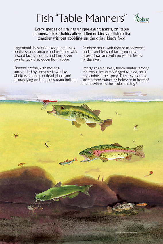 """An interpretive display at Lake Solano County Park visitor center, California, describes, via a pastel painting and text, how every species of fish has unique eating habits, or """"table manners."""" These habits allow different kinds of fish to live together without gobbling up the other kind's food."""