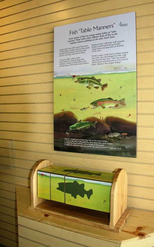 """The visitor center at Lake Solano County Park's interactive interpretive sign, """"Fish Table Manners,"""" is accompanied by a set of turning boxes that, when properly lined up, show how each fish's mouth, fin, and body type are shaped so the fish can thrive in a particular location in the water column and eat a specific kind of food. This game requires hand-eye coordination and sharp observation."""