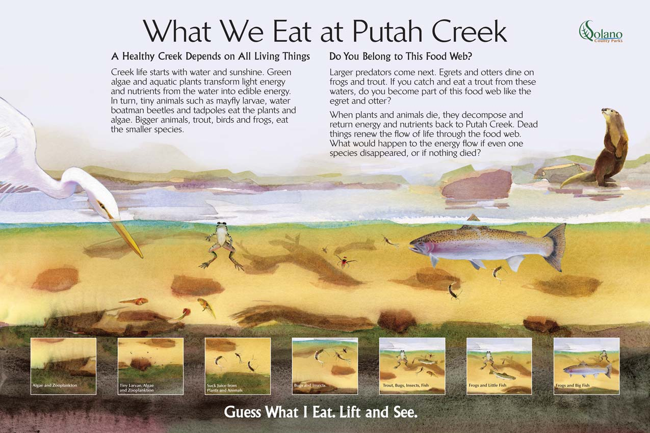 This interactive educational game shows a section of California's Putah Creek water filled with critters from pollywogs to a great egret. The educational game is to find what each animal in the water eats.