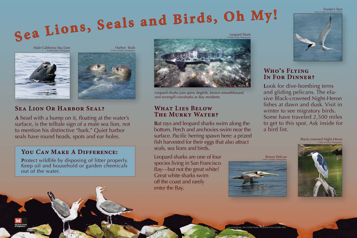 The education board shows photographer Ron LeValley's images describing some of the animals that live around the Army Corps of Engineers' San Francisco Bay Model in Sausalito, California: California sea lion, harbor seal, leopard shark, Forster's turn, brown pelican, and black-crowned night heron.