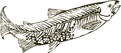 Erica-Fielder-Studios-Logo